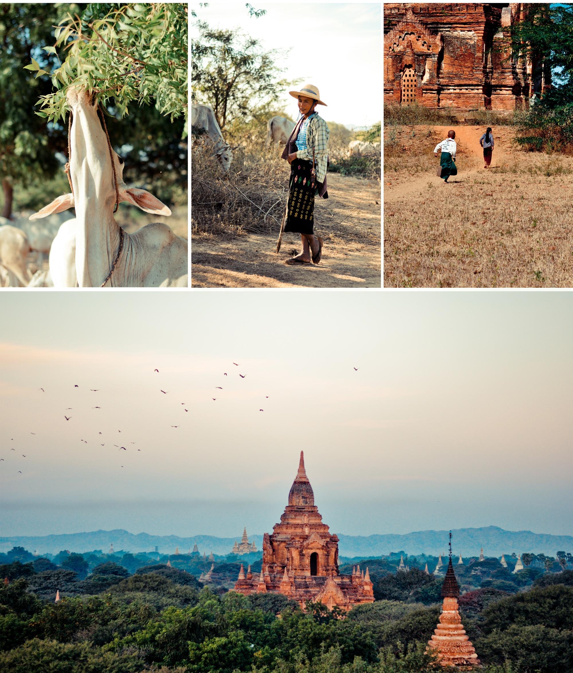 Bagan giau gi 8